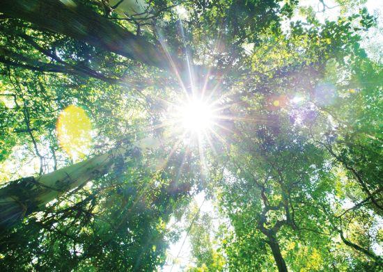 由于火山泥形成的红壤营养丰富,黄金海岸 的雨林生长得格外繁茂